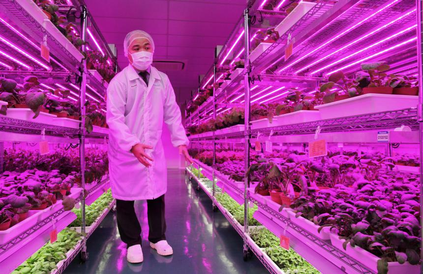 High-tech indoor vegetable farm in Singapore